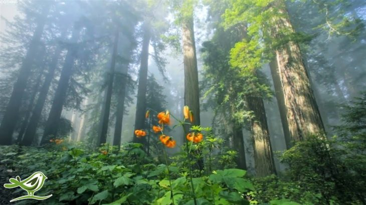 Beautiful Relaxing Music • Peaceful Piano Music & Guitar Music | Sunny Mornings by Peder B. Helland