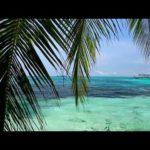【朝のくつろぎの音楽】ハワイアンミュージック – リラックスできる音楽-静かな-ポジティブ-笑顔-さわやかな-幸せ-民族 【 ハワイ】- Hawaiian Music