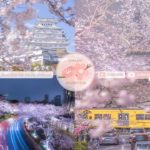 Japanese Sakura Relaxation Photos EP231 | Relaxing Music • 美しいリラックスミュージック • ヨガ瞑想リラクゼーション • 美しい音色 ピアノ