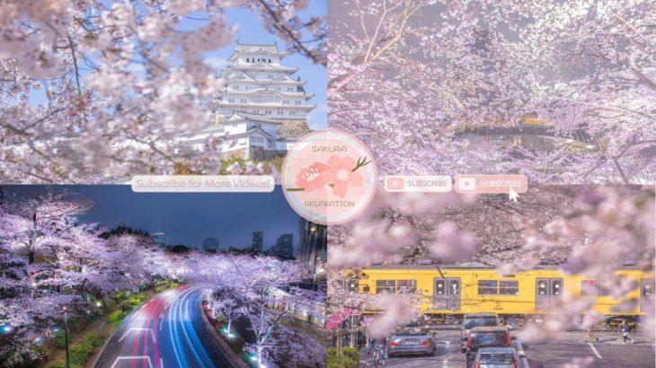 Japanese Sakura Relaxation Photos EP231   Relaxing Music • 美しいリラックスミュージック • ヨガ瞑想リラクゼーション • 美しい音色 ピアノ