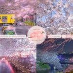 Japanese Sakura Relaxation Photos EP230 | Relaxing Music • 美しいリラックスミュージック • ヨガ瞑想リラクゼーション • 美しい音色 ピアノ