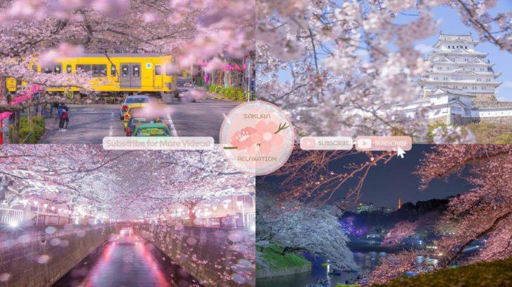 Japanese Sakura Relaxation Photos EP230   Relaxing Music • 美しいリラックスミュージック • ヨガ瞑想リラクゼーション • 美しい音色 ピアノ