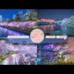 Japanese Sakura Relaxation Photos EP229 | Relaxing Music • 美しいリラックスミュージック • ヨガ瞑想リラクゼーション • 美しい音色 ピアノ
