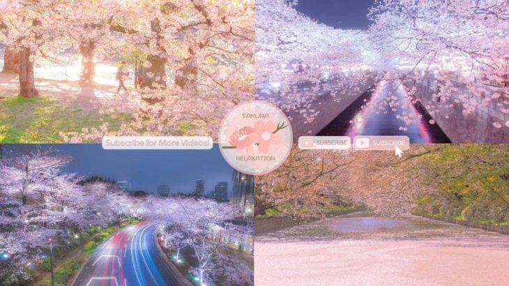 Japanese Sakura Relaxation Photos EP228 | Relaxing Music • 美しいリラックスミュージック • ヨガ瞑想リラクゼーション • 美しい音色 ピアノ