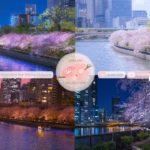 Japanese Sakura Relaxation Photos EP227 | Relaxing Music • 美しいリラックスミュージック • ヨガ瞑想リラクゼーション • 美しい音色 ピアノ
