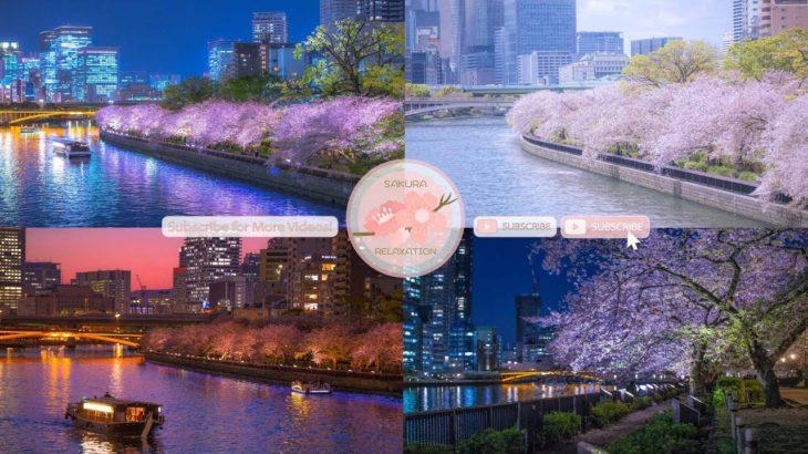 Japanese Sakura Relaxation Photos EP227   Relaxing Music • 美しいリラックスミュージック • ヨガ瞑想リラクゼーション • 美しい音色 ピアノ