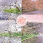 Japanese Sakura Relaxation Photos EP226 | Relaxing Music • 美しいリラックスミュージック • ヨガ瞑想リラクゼーション • 美しい音色 ピアノ