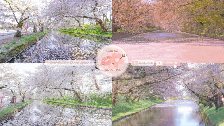 Japanese Sakura Relaxation Photos EP226   Relaxing Music • 美しいリラックスミュージック • ヨガ瞑想リラクゼーション • 美しい音色 ピアノ