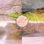 Japanese Sakura Relaxation Photos EP213 | Relaxing Music • 美しいリラックスミュージック • ヨガ瞑想リラクゼーション • 美しい音色 ピアノ