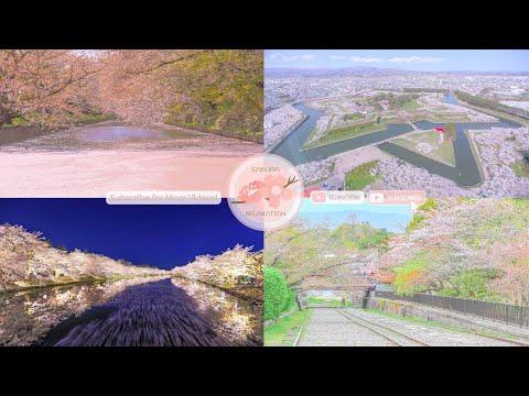 Japanese Sakura Relaxation Photos EP203 | Relaxing Music • 美しいリラックスミュージック • ヨガ瞑想リラクゼーション • 美しい音色 ピアノ