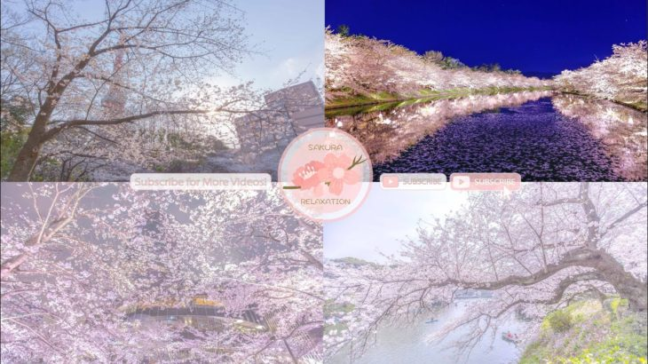 Japanese Sakura Relaxation Photos EP190 | Relaxing Music • 美しいリラックスミュージック • ヨガ瞑想リラクゼーション • 美しい音色 ピアノ
